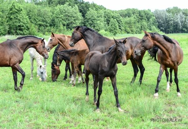 Paarden vangen met PSC de Zonnehoeve
